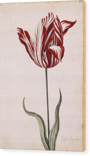 Semper Augustus Wood Print