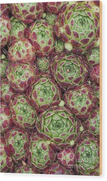 Sempervivum Atlanticum Pattern Wood Print
