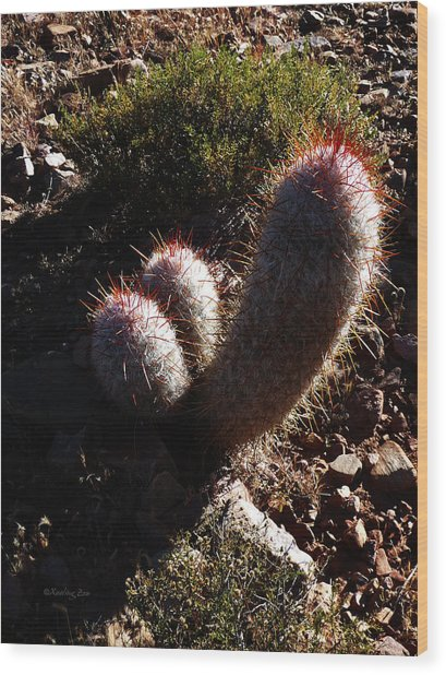 Senor Cacti Wood Print