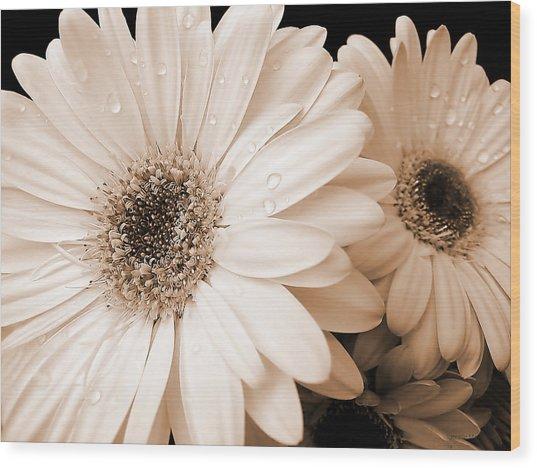 Sepia Gerber Daisy Flowers Wood Print