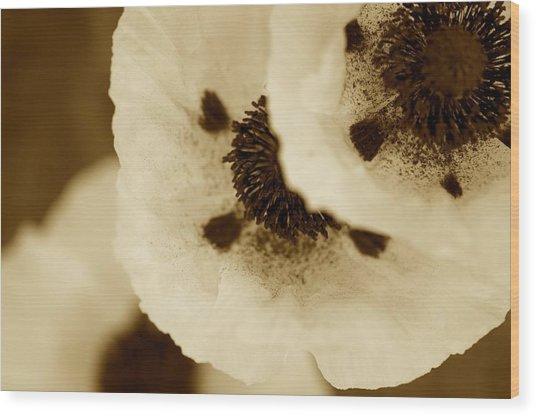 Sepia Poppies Wood Print