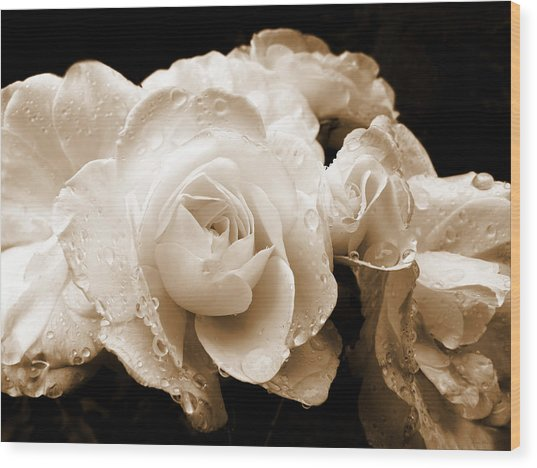 Sepia Roses With Rain Drops Wood Print