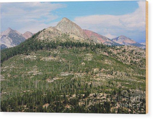 Sequoi National Park Wood Print by Sophie Vigneault
