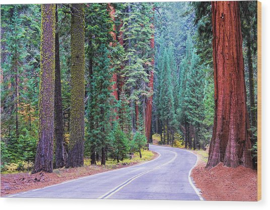 Sequoia Hwy Wood Print