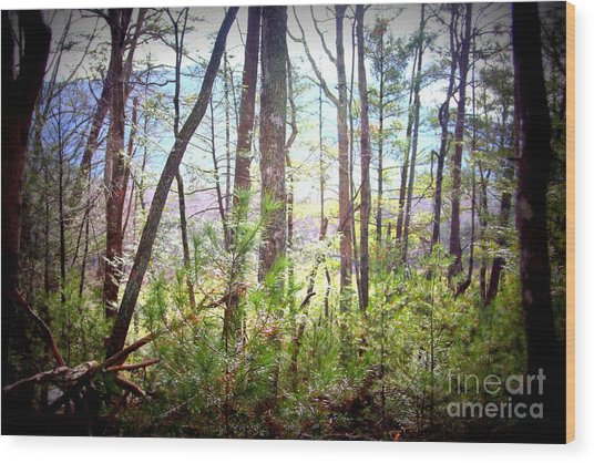 Serene Woodlands Wood Print