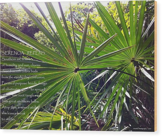 Serenoa Repens Wood Print by Catherine Favole-Gruber