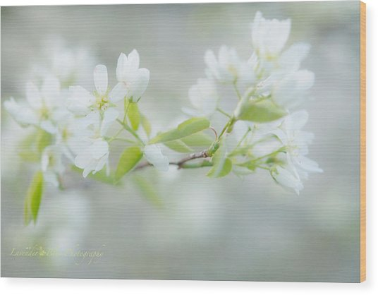 Serviceberry Blossoms Wood Print by Beverly Cazzell