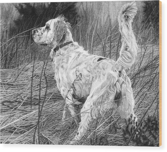 Setter In The Field Wood Print by Rob Christensen