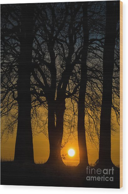 Setting Between The Trees - Wittenham Clumps Wood Print by OUAP Photography