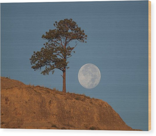 Setting Harvest Moon Wood Print