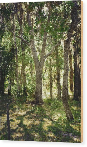 Shadow Forest Wood Print