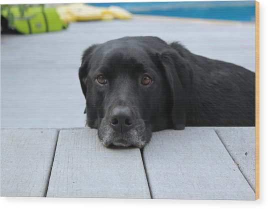 Shadow Lounging On The Deck Wood Print