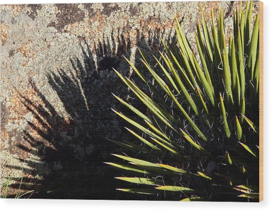 Shadow Of The Yucca Plant Wood Print