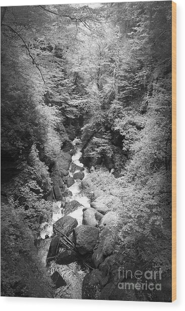 Shadowed Stream Wood Print