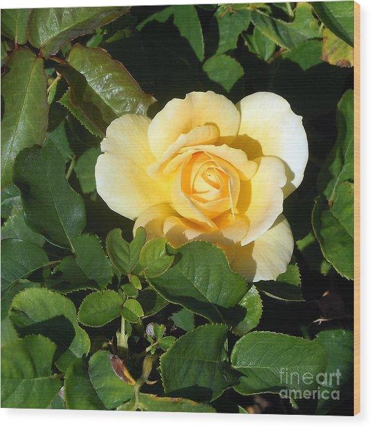 Shadowed Yellow Rose Wood Print