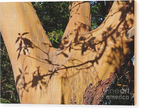 Shadows On Arbutus Wood Print
