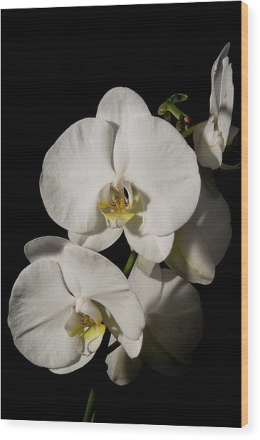 Shadowy Orchids Wood Print