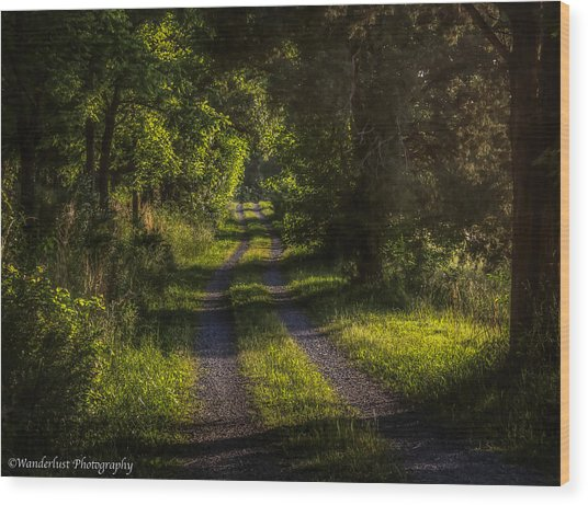 Shady Country Lane Wood Print by Paul Herrmann