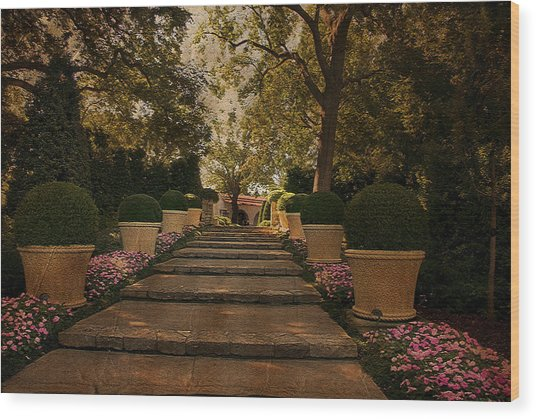 Shady Garden Walk Wood Print by Cindy Rubin
