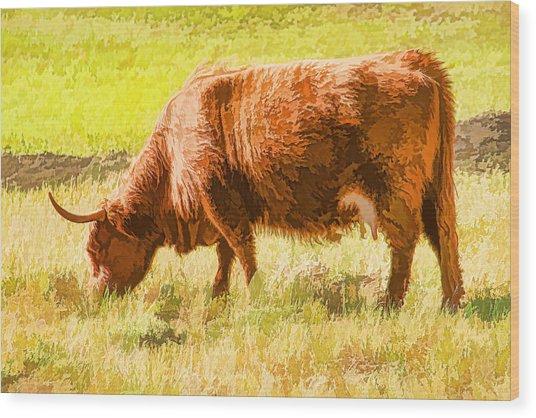 Shaggy Scottish Highlander Wood Print