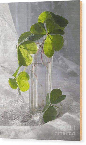 Shamrocks In A Vintage Bottle Wood Print