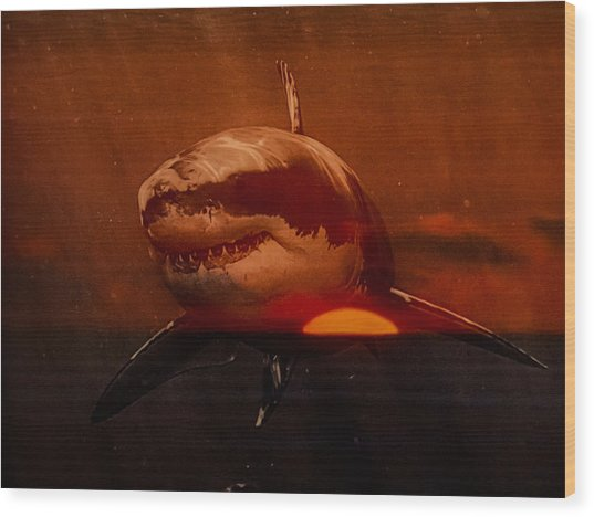 Shark In A Sunset Wood Print