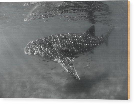 Shark Rays Wood Print by David Valencia