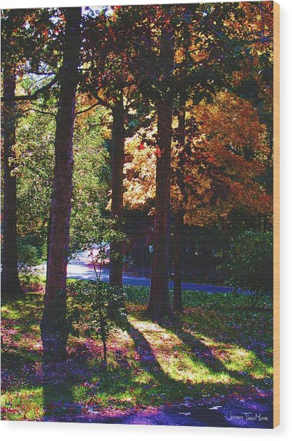 Shawnee Drive Through The Trees Wood Print by Jeffrey Todd Moore