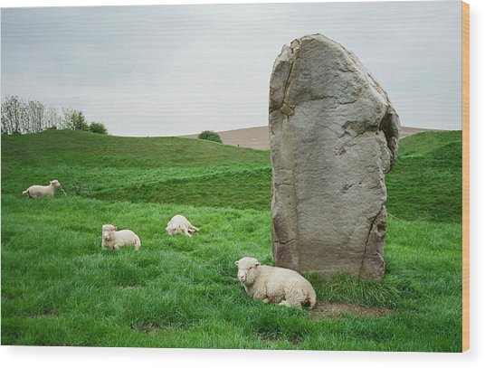 Sheep At Avebury Stones - Original Wood Print
