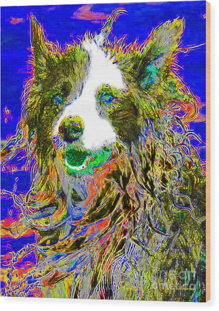 Sheep Dog 20130125v3 Wood Print by Wingsdomain Art and Photography