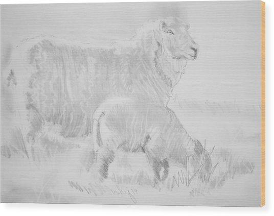 Sheep Lamb Pencil Drawing Wood Print
