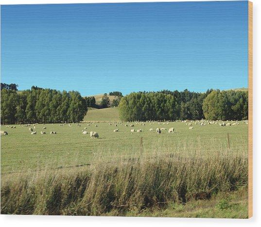 Sheep On Roadside Wood Print by Ron Torborg