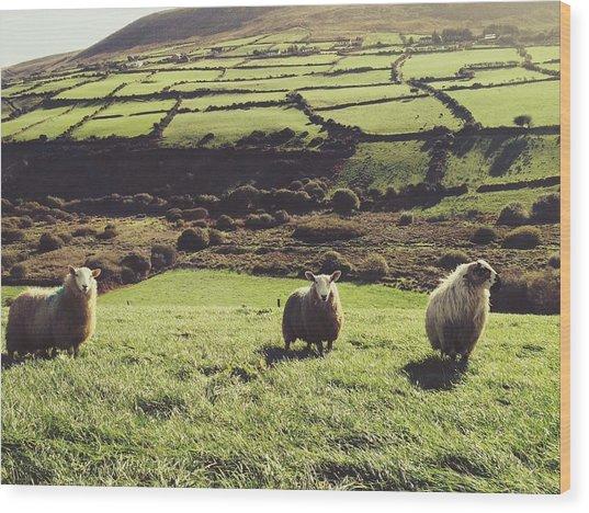 Sheep Standing In Field Wood Print by Thomas Peham / Eyeem