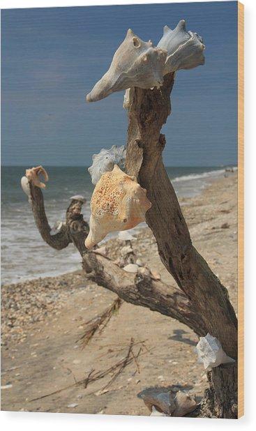 Shell Art Wood Print
