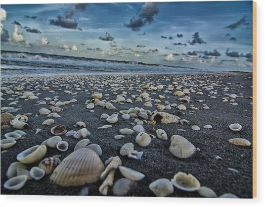 Shell Beach Wood Print