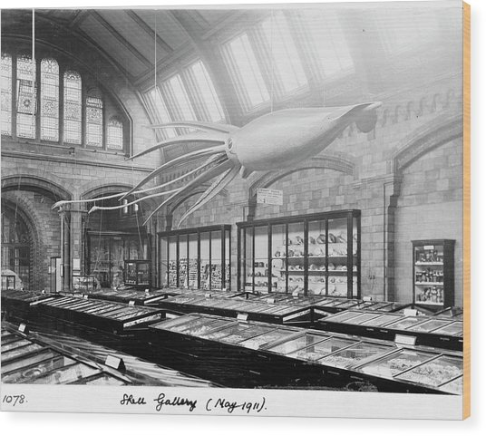 Shell Gallery Wood Print by Natural History Museum, London/science Photo Library
