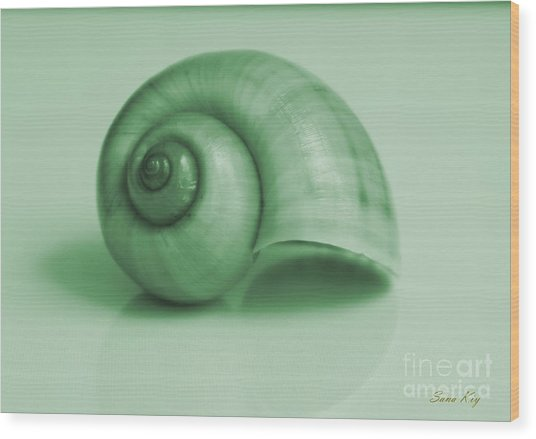 Shell. Light Green Wood Print