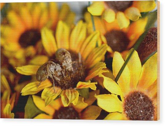 Shell Of A Bug On Flower Wood Print by Jeffrey Platt