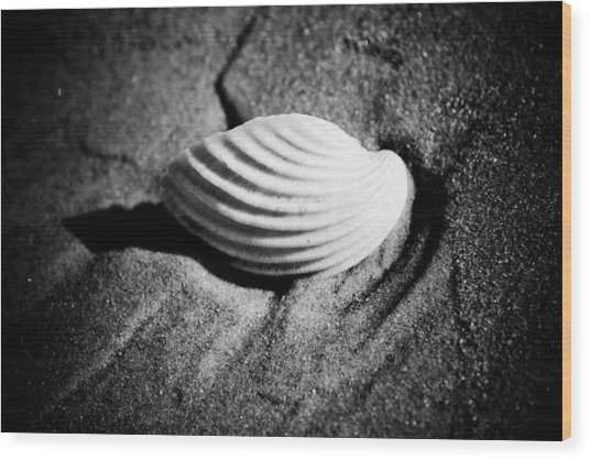 Shell On Sand Black And White Photo Wood Print