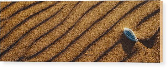 Shell Voyage Wood Print