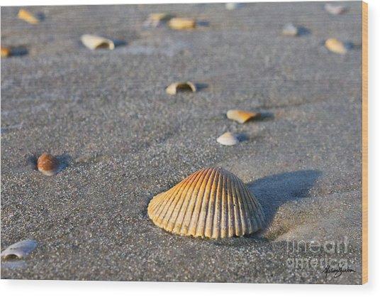 Shells 01 Wood Print