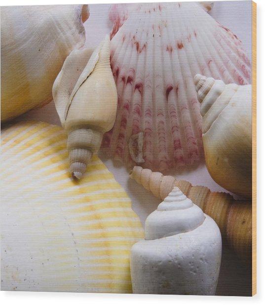 Shells Wood Print