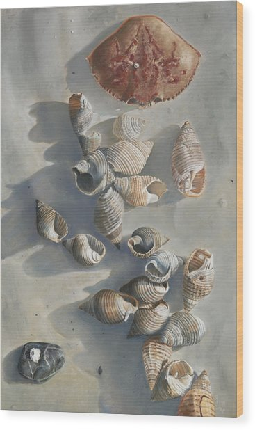 Shells On A Sandy Beach Wood Print