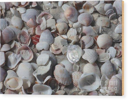 Shells On Treasure Island Wood Print