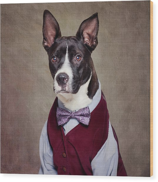 Shelter Pets Project - Petey Wood Print