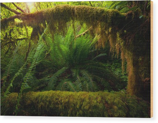 Sheltered Fern Wood Print