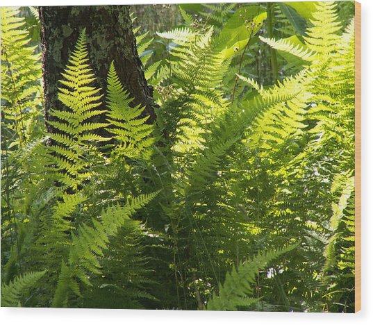 Shenandoah Ferns Wood Print by Amanda Kobeshimi