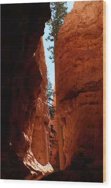 Sherbet Walls Wood Print