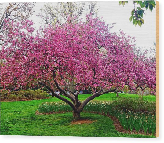 Sherwood Gardens Tree Wood Print
