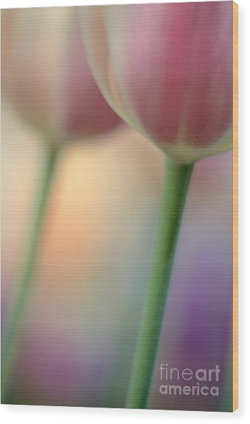 Sherwood Tulips Wood Print